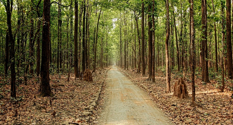 Sitabani-Forest-Reserve