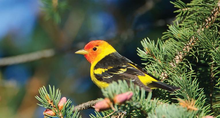 birding-in-corbett