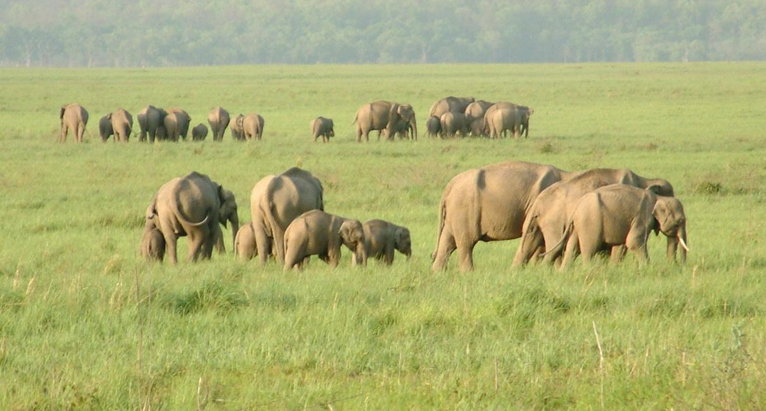 These things should be done in Corbett National Park - A Thrilling Vacation!