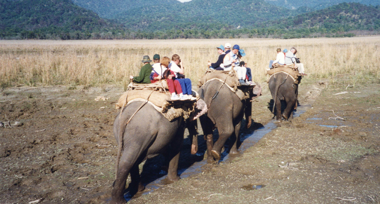 safari-in-corbett