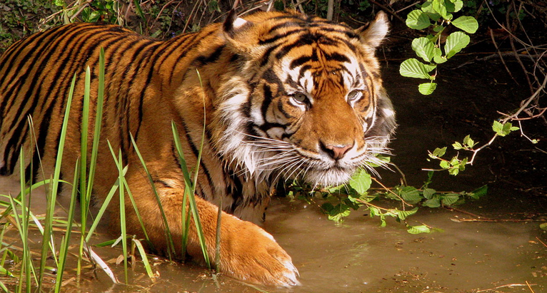 sunderban-national-park