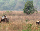 corbett-elephant-safari