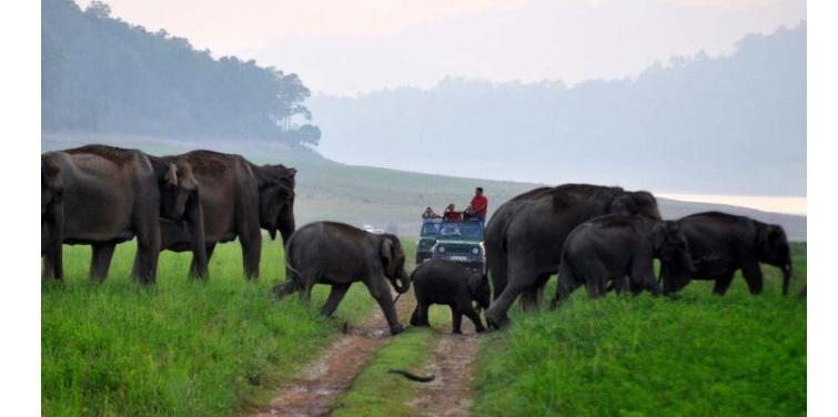 corbett-jee--safari