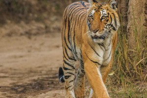 Corbett National Park India